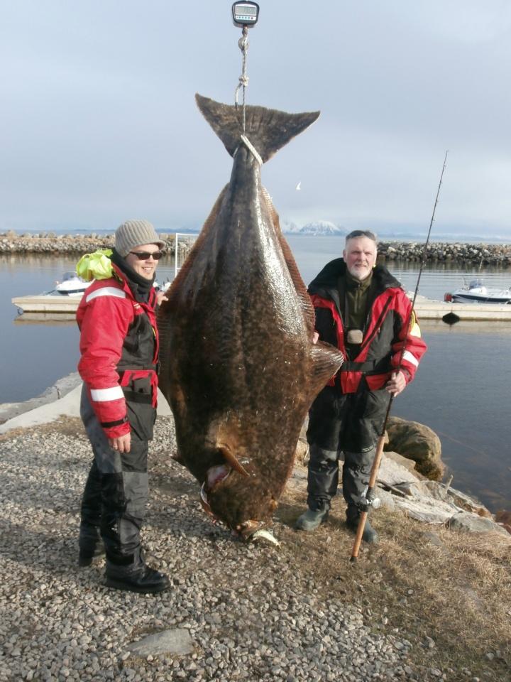 Halibut 195.2kg - Andoy fiske-camp 2013 04 29